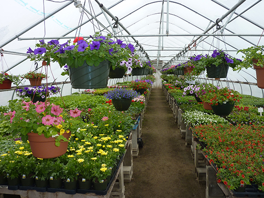 Let us help you choose some annuals for your specific location